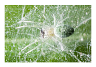 Spider Mites - Common Pests in the Garden